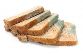 Плесень на хлебе: опасна ли она?